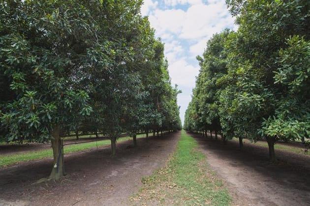 Bundaberg North QLD 4670 - Image 3