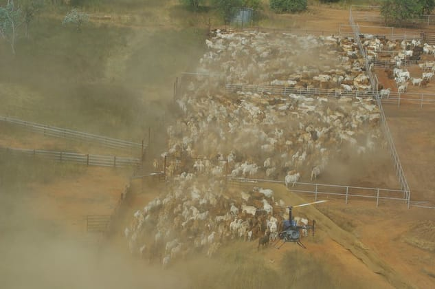 Iconic NT Cattle Station Tennant Creek NT 0860 - Image 1