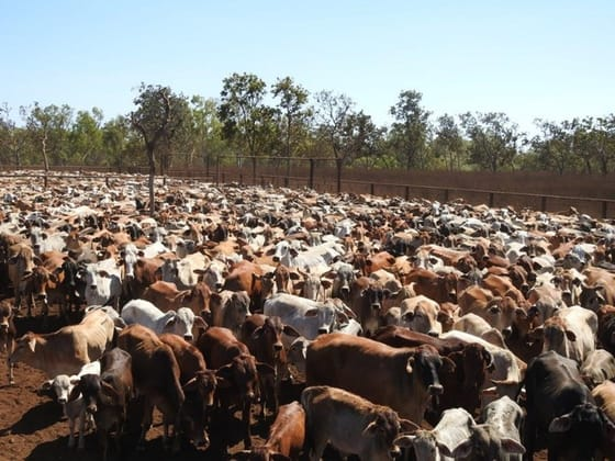 Iconic NT Cattle Station Tennant Creek NT 0860 - Image 4