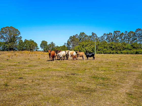 142 Murrays Road Tanah Merah QLD 4128 - Image 5