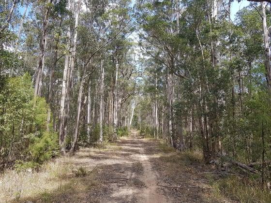 Gorton Timber, Mill Creek Road Stroud NSW 2425 - Image 3