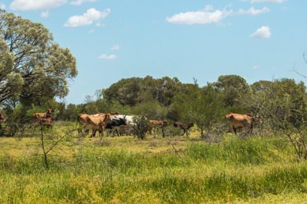 Bowen Downs Muttaburra QLD 4732 - Image 4