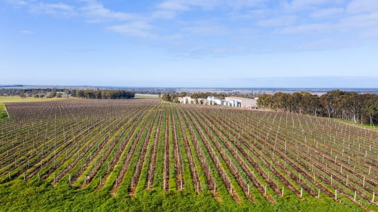 Stonehaven Winery, 7089 Riddoch Highway Padthaway SA 5271 - Image 5