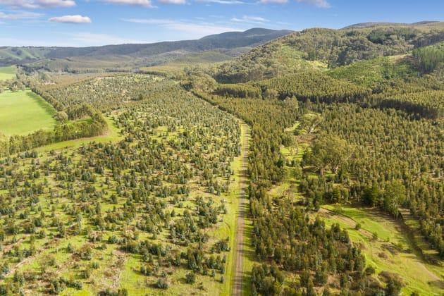 910 King Parrot Creek Road Strath Creek VIC 3658 - Image 5