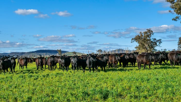 Goolma NSW 2852 - Image 4