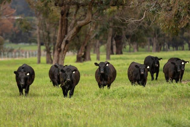 """Green Valley"" Taylors Road Guyra NSW 2365 - Image 2"