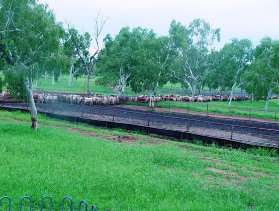 230 Carbeen Road Katherine NT 0850 - Image 3