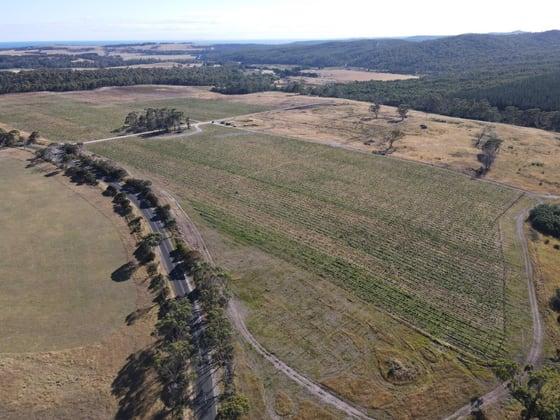 Evandale Vineyard and Pipers River Vineyard Evandale Road Evandale TAS 7212 - Image 3