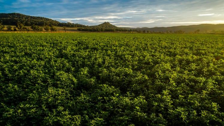 Bylong NSW 2849 - Image 3