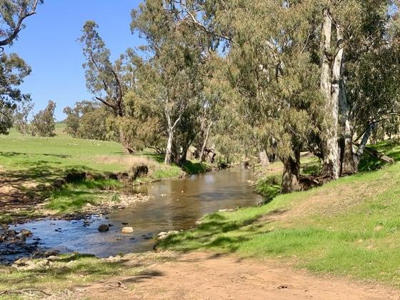 897 Murringo Flats Road Murringo NSW 2586 - Image 3