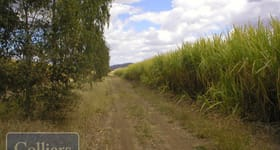 Rural / Farming commercial property for sale at 596 Freeman Road Clare QLD 4807