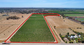 Rural / Farming commercial property for sale at Cobram Stone Fruit Orchard Cobram-South Road Cobram VIC 3644