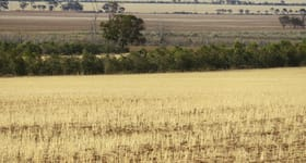 Rural / Farming commercial property sold at Nicoletti Group Merredin WA 6415