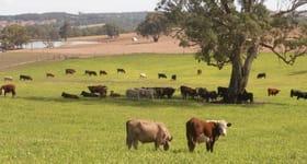 Rural / Farming commercial property sold at 221 McLean Road Birdwood SA 5234