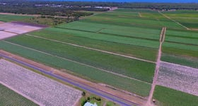 Rural / Farming commercial property for sale at 453 Lindemans Road Moore Park Beach QLD 4670
