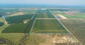 Rural / Farming commercial property sold at Macadamia Aggregation Winfield Road Bundaberg North QLD 4670