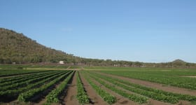 Development / Land commercial property for sale at Large scale horticultural enterprise Bowen QLD 4805