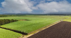 Rural / Farming commercial property for sale at Cardstone Road Dingo Pocket QLD 4854