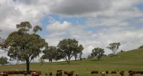 Rural / Farming commercial property sold at For Sale: Avondale Dunedoo NSW 2844