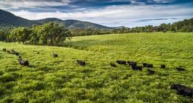 Rural / Farming commercial property for sale at Kingsgate Station Glen Innes NSW 2370