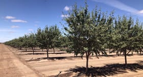 Rural / Farming commercial property for sale at Tharbogang Almonds White Road Tharbogang NSW 2680
