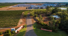 Rural / Farming commercial property for sale at McWilliam's Wines Group 268 Jack McWilliam Road Hanwood NSW 2680