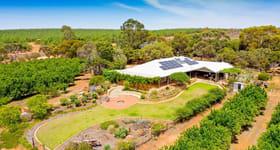 Rural / Farming commercial property for sale at 36 Drogemuller Road Moorook South SA 5332
