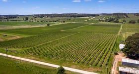 Rural / Farming commercial property for sale at Stanley Flat & Noble Road Vineyards, Horrocks Highway Stanley Flat SA 5453