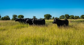 "Livestock commercial property sold at ""Bangor South"" Redford Road Mungallala QLD 4467"
