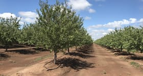 Rural / Farming commercial property for sale at Coughlan Road Almonds 2128 Coughlan Road Leeton NSW 2705