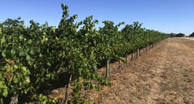 Rural / Farming commercial property for sale at Waloram Vineyard Maaoupe Road Coonawarra SA 5263