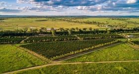 """Other commercial property for sale at """"Gayndah Orchard Aggregation"""" 15851 Burnett Highway Gayndah QLD 4625"""