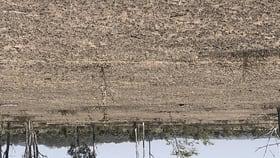 Rural / Farming commercial property for sale at Ridgelands Rd Ridgelands Rockhampton QLD 4701