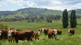 Rural / Farming commercial property sold at Belmore Westbrook Road Oberne Creek NSW 2650