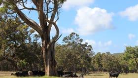 Rural / Farming commercial property sold at 76 Mount Boyle Road Kalgan WA 6330