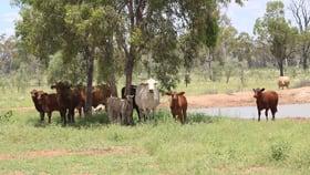 Rural / Farming commercial property sold at 8315 Jericho Road Blackall QLD 4472