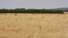 Rural / Farming commercial property for sale at Corries Lane Mount Egerton VIC 3352