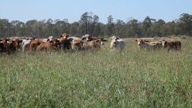 """Rural / Farming commercial property for sale at """"GLENCOE"""" 1279 ACRES Chinchilla QLD 4413"""