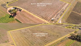 Rural / Farming commercial property for sale at 486, 486A, Trioda Street & 479b Krake Road Red Cliffs VIC 3496