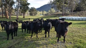 Rural / Farming commercial property for sale at 64 Mersey Forest Road Liena TAS 7304