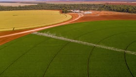 Rural / Farming commercial property for sale at Lachlan River Road Hillston NSW 2675