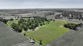 Rural / Farming commercial property for sale at 55 Koch Road Rowland Flat SA 5352