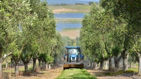 Rural / Farming commercial property for sale at Award Winning, Fully Integrated Olive Enterprise Finniss SA 5255