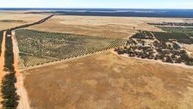 Rural / Farming commercial property for sale at 632 Gurrai North Road Lameroo SA 5302