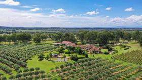 Rural / Farming commercial property for sale at 259 De Beyers Road Pokolbin NSW 2320