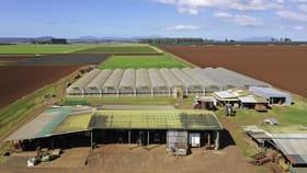 Rural / Farming commercial property for sale at 204 Graham Road Tolga QLD 4882