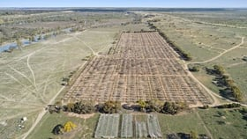 Rural / Farming commercial property for sale at Lot 123 Murraylands Road Swan Reach SA 5354