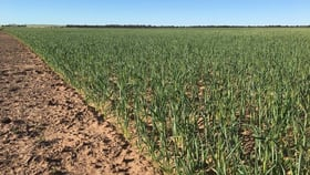 Rural / Farming commercial property for sale at Lot 1 Yandle Road South Kumminin WA 6368