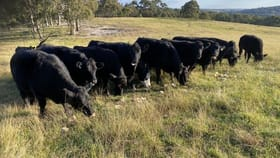 Rural / Farming commercial property for sale at 4856 Oallen Ford Road Bungonia NSW 2580