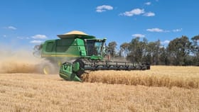 Rural / Farming commercial property for sale at 389 Kerimbilla Road Goondiwindi QLD 4390